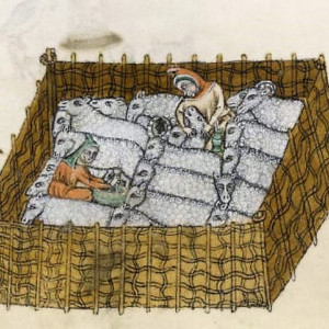 14. A shepherd administering a medicine to a sheep. 'Luttrell Psalter'. London, British Library, MS Add. 42130 (c. 1335-1340).